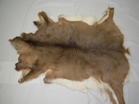 White Tail Deer Hide