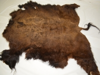 Bison / Buffalo 5 1/2 feet by 5 1/2 feet