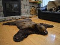 Genuine Dark Brown Bear Fur Rug