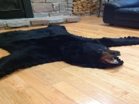 Genuine Black Bear Fur Rug