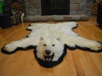 Genuine Polar Bear Fur Rug