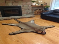 Genuine Cougar Fur Rug